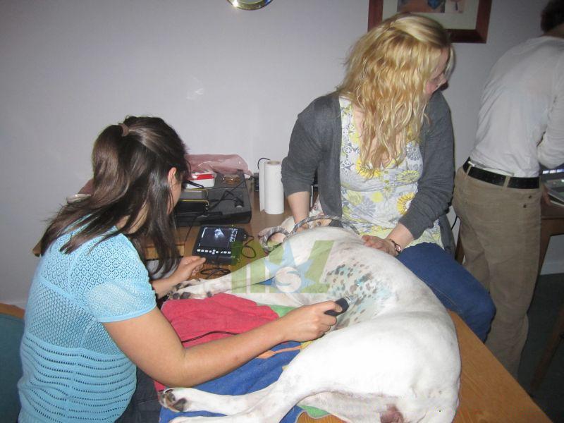 cheap medical veterinary ultrasound machine-MSLVU09